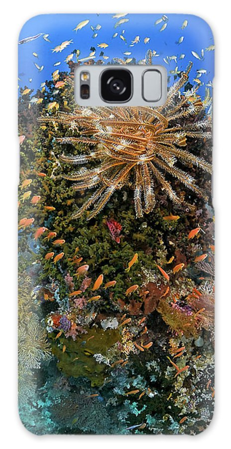 Animal Galaxy S8 Case featuring the photograph Feather Star (crinoidea by Jaynes Gallery