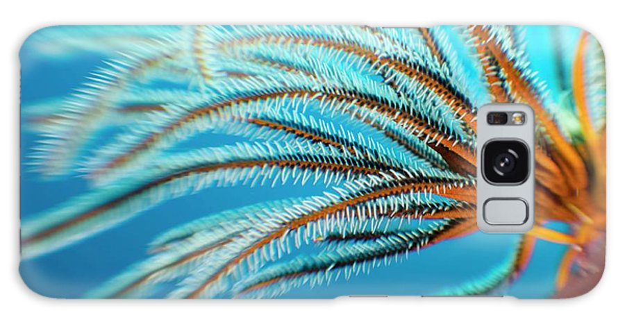 Animal Galaxy S8 Case featuring the photograph Featherstar by Scubazoo/science Photo Library