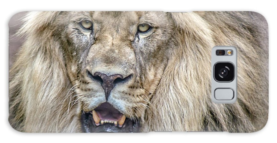 Lions Galaxy S8 Case featuring the photograph Feeling Like A King by Elaine Malott