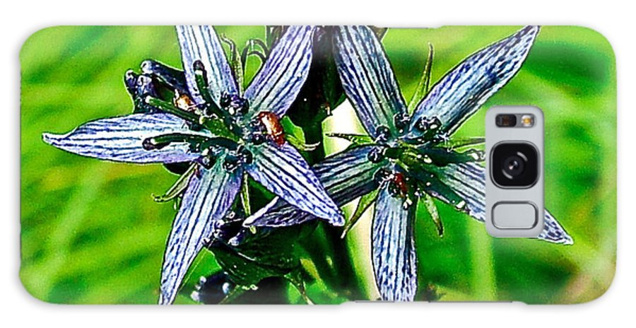Felwort Or Star Gentian On Otter-bahn Trail In Seldovia Galaxy S8 Case featuring the photograph Felwort Or Star Gentian On Otter-bahn Trail In Seldovia-alaska by Ruth Hager