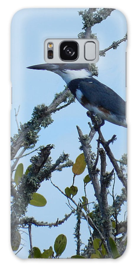 Belted Kingfisher Galaxy S8 Case featuring the photograph Female Belted Kingfisher by Grace Dillon