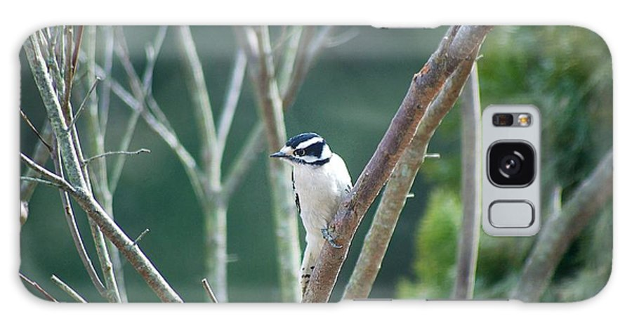 Woodpecker Galaxy S8 Case featuring the photograph Female Downy Woodpecker by Maggie Martin