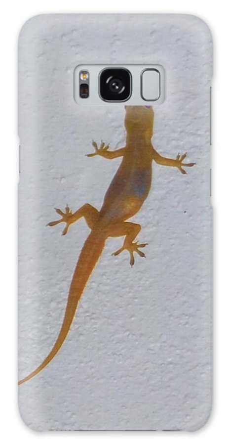 Climbing Wall At Night Galaxy S8 Case featuring the photograph Female Nocturnal Lizard by Robert Floyd