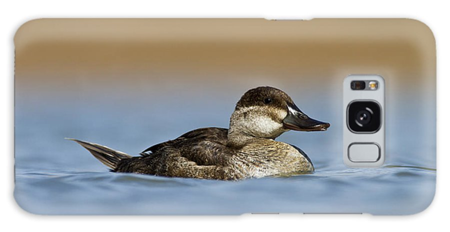 Ruddy Duck Galaxy S8 Case featuring the photograph Female Ruddy Duck by Bryan Keil