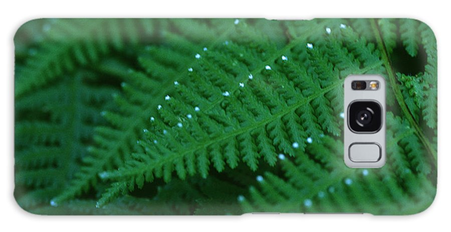 Fern Galaxy S8 Case featuring the photograph Fern by Christopher Meade
