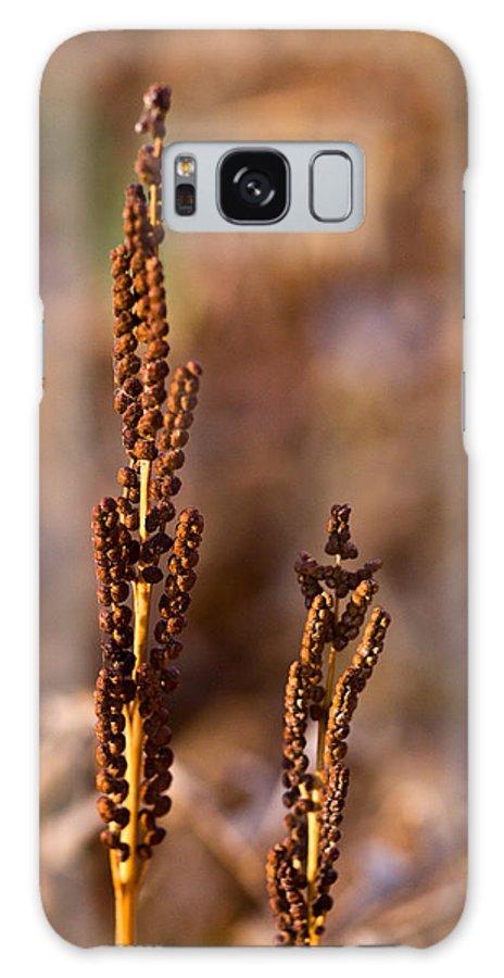 Fern Spore Stalk In Morning Sun Galaxy S8 Case featuring the photograph Fern Spore Stalk In Morning 2 by Douglas Barnett