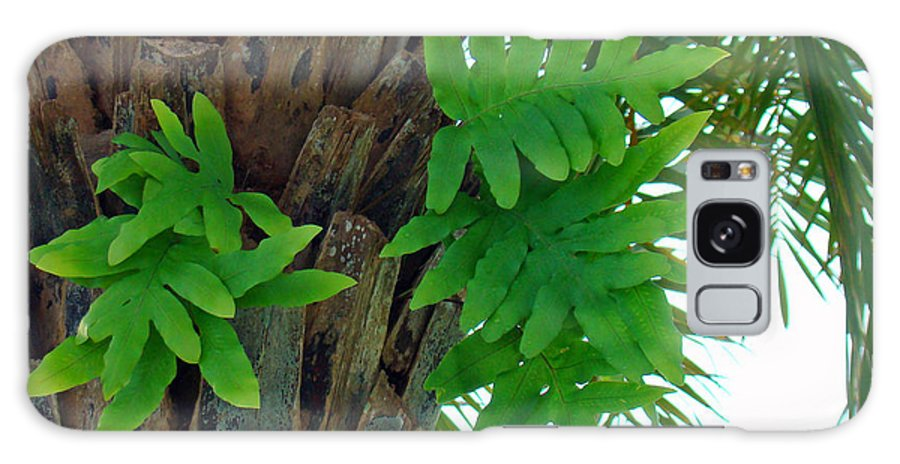 Fern Galaxy S8 Case featuring the photograph Ferns 1 by Nancy L Marshall