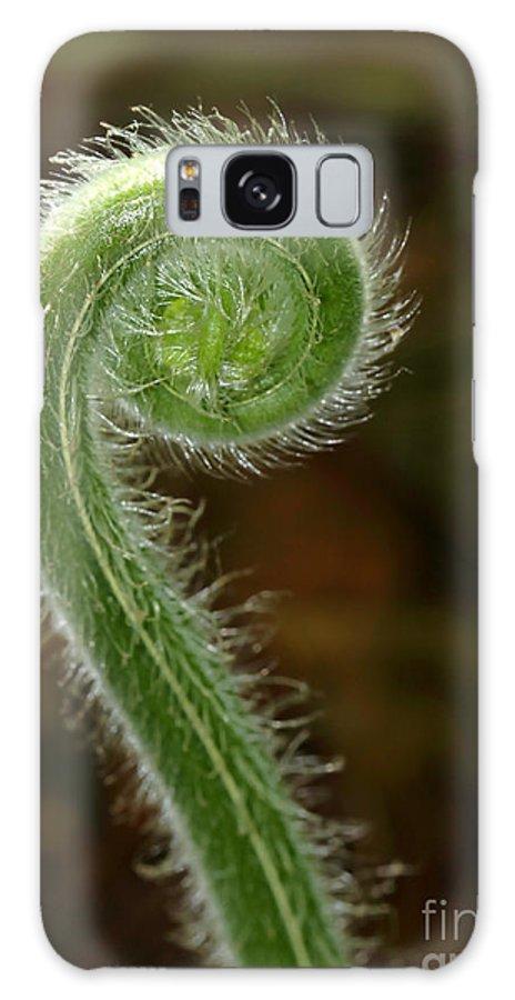 Landscape Galaxy S8 Case featuring the photograph Fiddlehead Fern Curl by Sabrina L Ryan