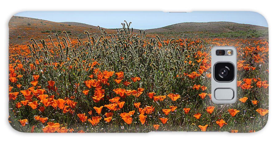 California Galaxy S8 Case featuring the photograph Fiddlenecks And Poppies by Susan Rovira