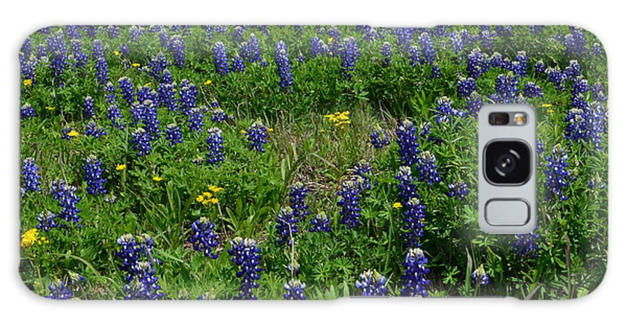 Bluebonnets Galaxy S8 Case featuring the photograph Field Of Bluebonnets by Hilton Barlow