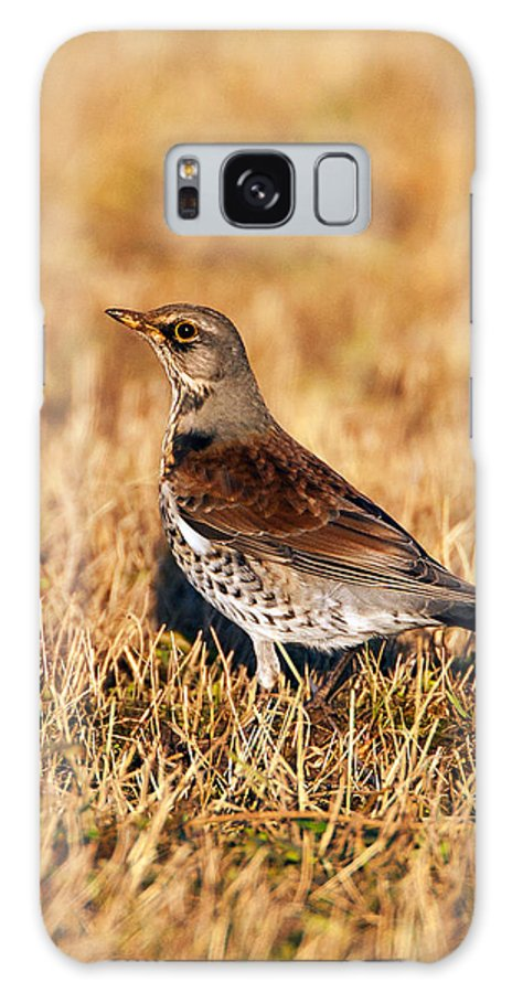 Thrush Galaxy S8 Case featuring the photograph Fieldfare by Paul Scoullar