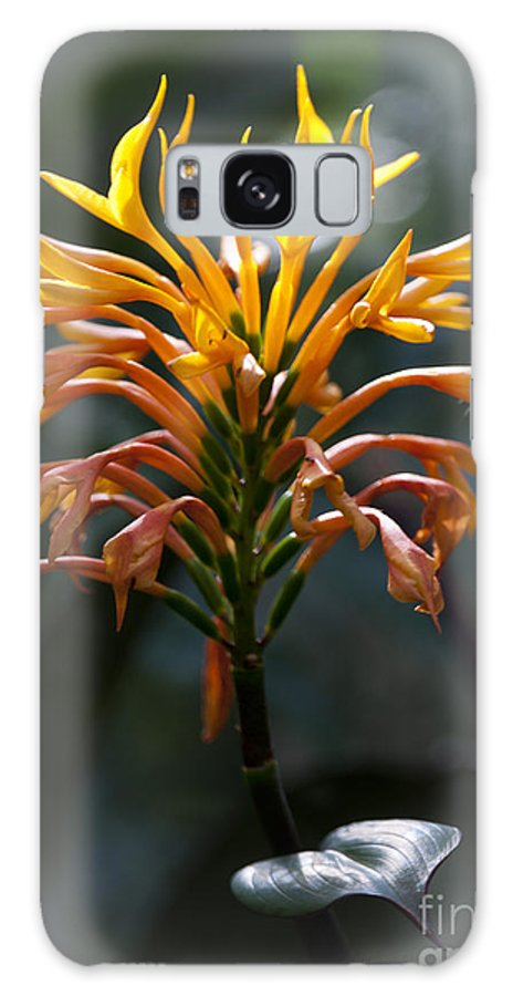 Orange Flower Galaxy S8 Case featuring the photograph Fiery Flower by Tony Reilly