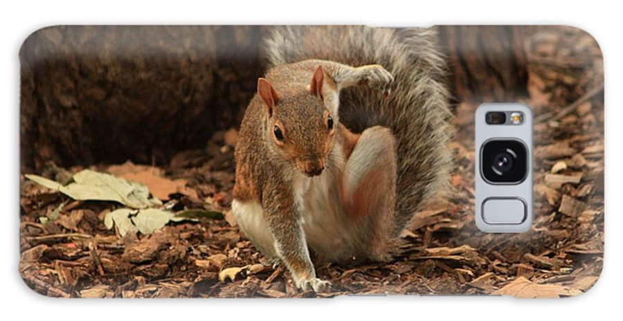 Animals Galaxy S8 Case featuring the photograph Fighter Squirrel by Nick Difi
