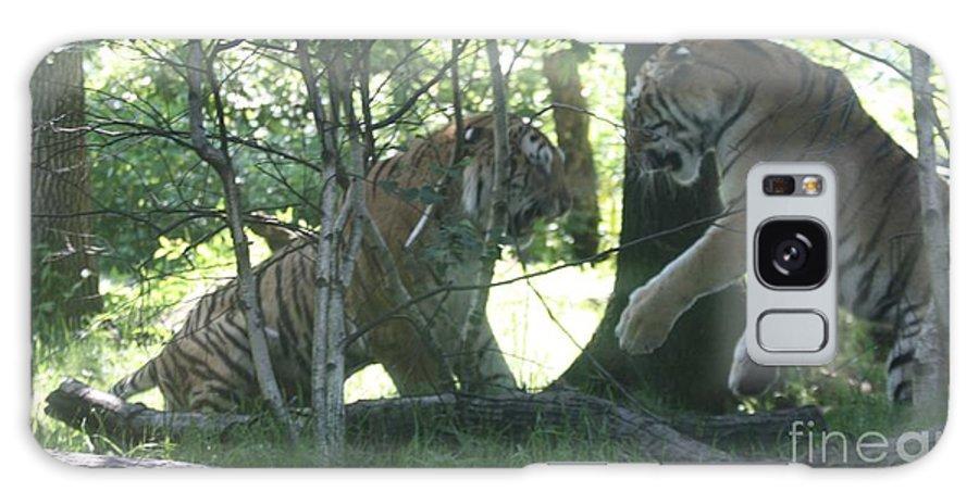 Fighting Siberian Tigers Galaxy S8 Case featuring the photograph Fighting Siberian Tigers by John Telfer