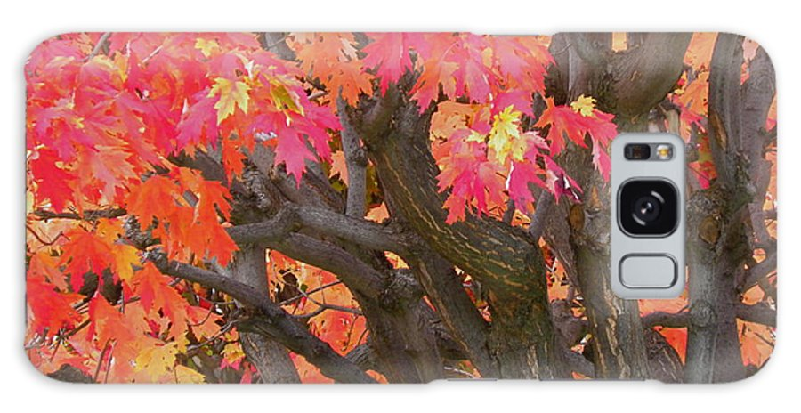 Maple Tree Galaxy S8 Case featuring the photograph Fire Maple by Laura Yamada