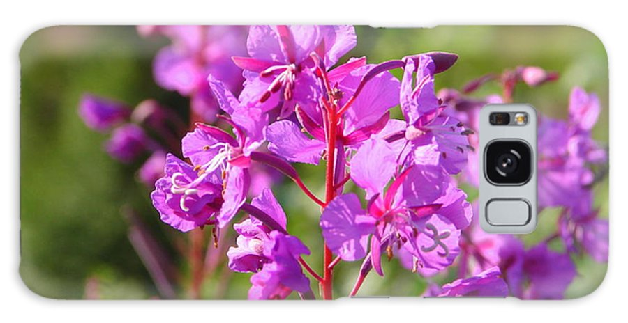 Fire Galaxy S8 Case featuring the photograph Fire Weed 3 by Lew Davis