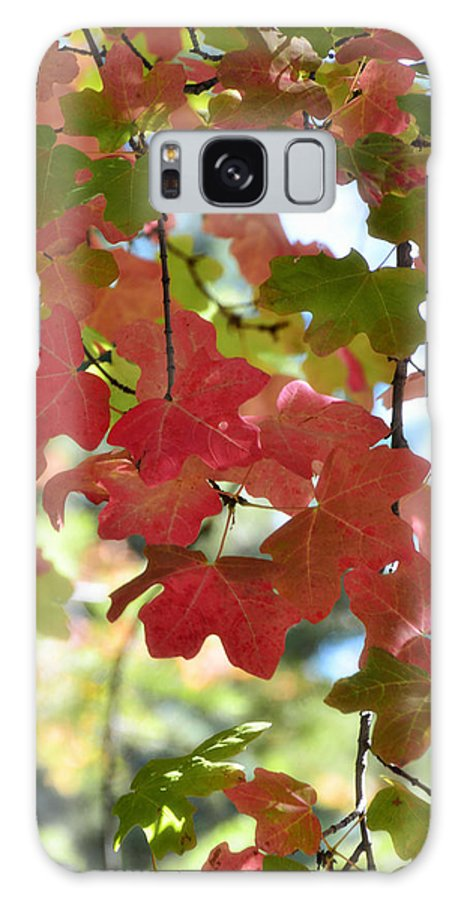 Fall Foliage Galaxy S8 Case featuring the photograph First Signs Of Fall by Saija Lehtonen