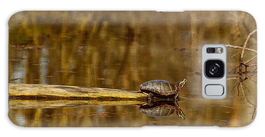 Painted Turtle Galaxy S8 Case featuring the photograph First Turtle by Thomas Young