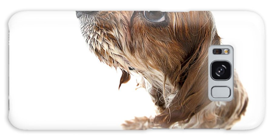 Adorable Galaxy S8 Case featuring the photograph Fisheye Wet Archie by Jane Rix
