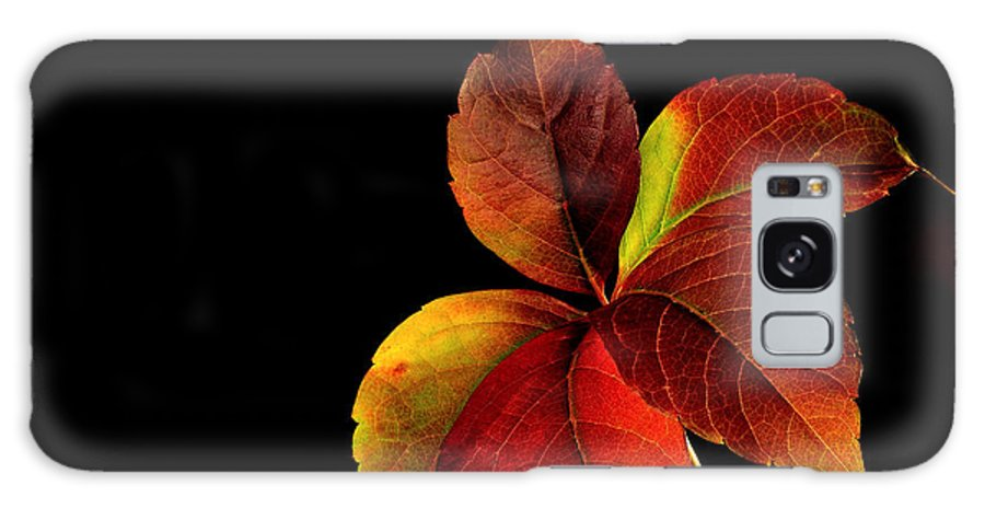 Autumn Galaxy S8 Case featuring the photograph Five Leaves by Marwan Khoury