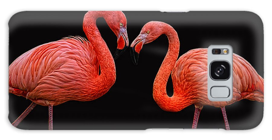 Animals Galaxy S8 Case featuring the photograph Flamenco ... Baby by Joachim G Pinkawa