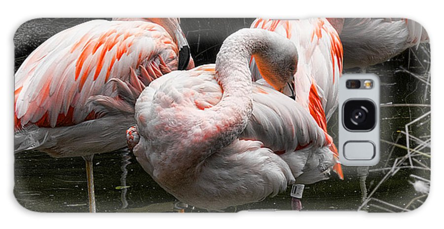 Animals Galaxy S8 Case featuring the photograph Flamingo 5 by Chuck Kuhn
