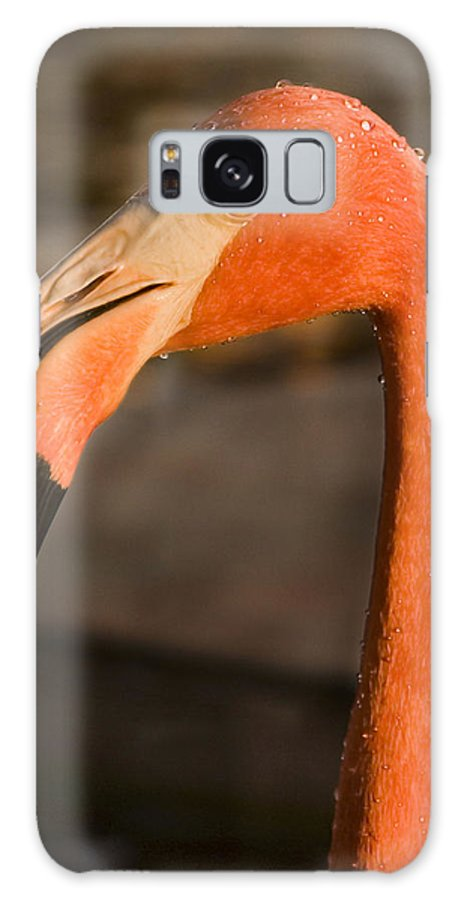 3scape Galaxy Case featuring the photograph Flamingo by Adam Romanowicz