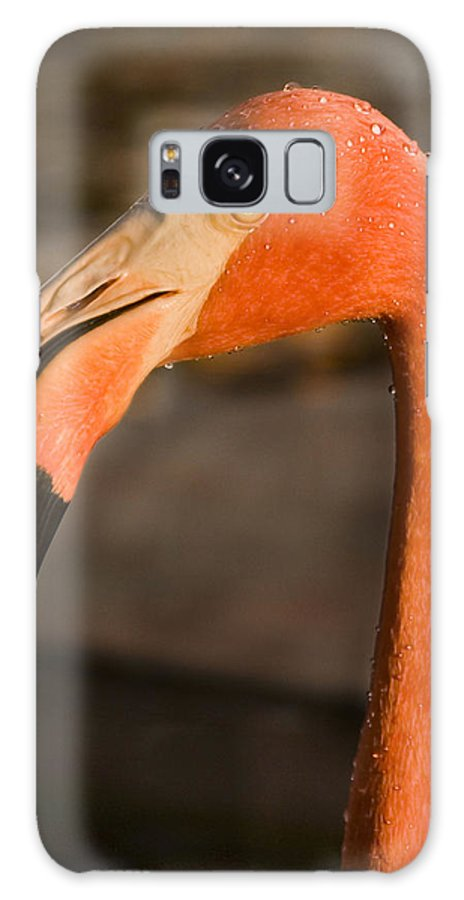 3scape Galaxy S8 Case featuring the photograph Flamingo by Adam Romanowicz