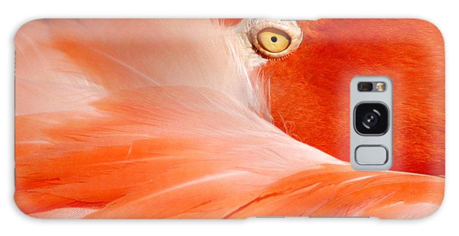 Flamingo Galaxy S8 Case featuring the photograph Flamingo Eye by Don Johnson