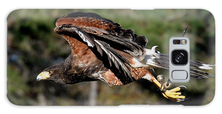 Harris Hawk Galaxy S8 Case featuring the photograph Flight Of The Hawk by Erin O'Neal-Morie