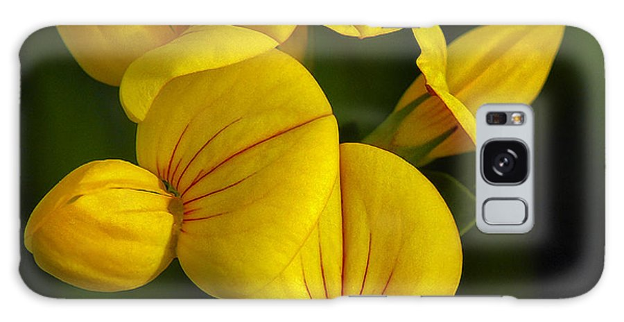 Abundance Galaxy S8 Case featuring the photograph Flower 105 by Ingrid Smith-Johnsen