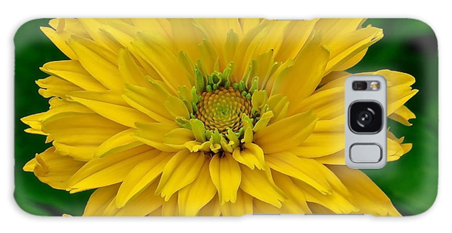 Flower Galaxy S8 Case featuring the photograph Flower 111 by Patsy Pratt