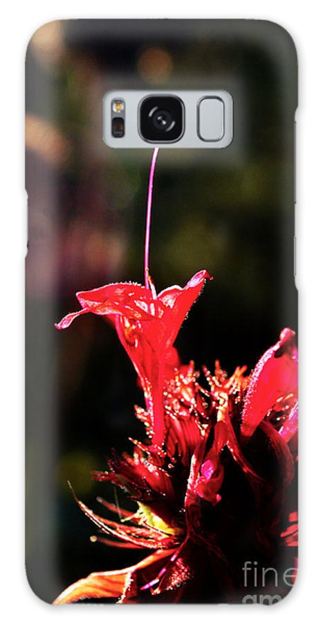 Flower Galaxy S8 Case featuring the photograph Flower 7 by Bener Kavukcuoglu