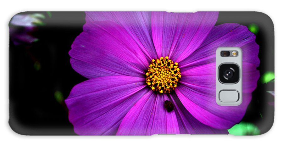 Flower Galaxy S8 Case featuring the photograph Flower Bug- Viator's Agonism by Vijinder Singh
