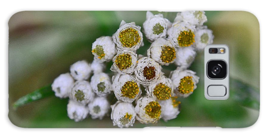 Flower Buttons Landscape Galaxy S8 Case featuring the photograph Flower Buttons by Mae Wertz