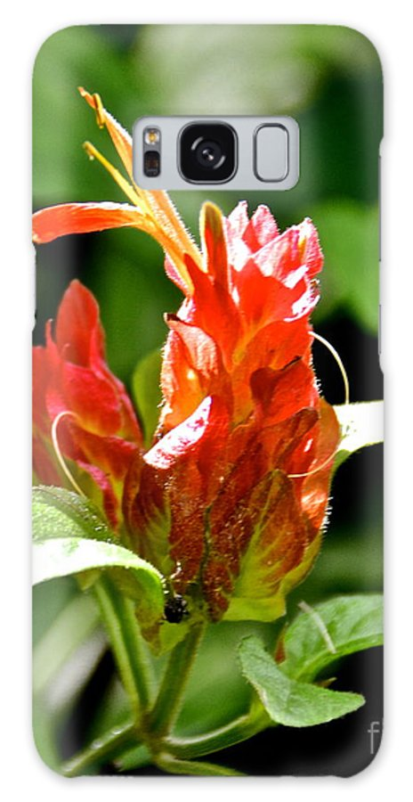 Flower Galaxy S8 Case featuring the photograph Flower by Carol Bradley
