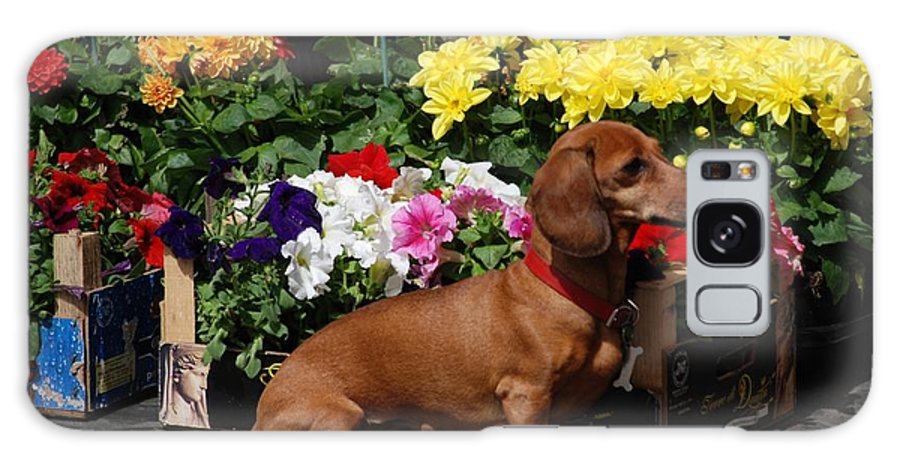 Flower Market Galaxy S8 Case featuring the photograph Flower Market Guard Dog by Eric Tressler