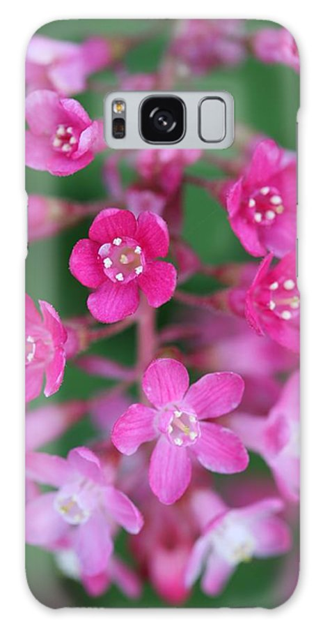 Ribes Currant Galaxy S8 Case featuring the photograph Flowering Currant by Mark Severn