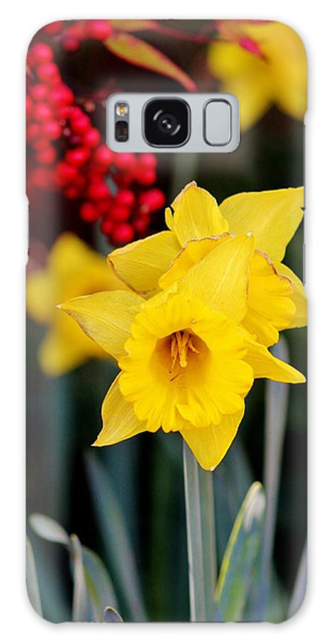 Wildlife Galaxy S8 Case featuring the photograph Flowers And Berries 030515ab by Edward Dobosh