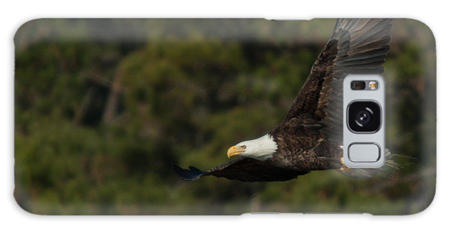 Accomack County Galaxy S8 Case featuring the photograph Flying Eagle by Scott Bush