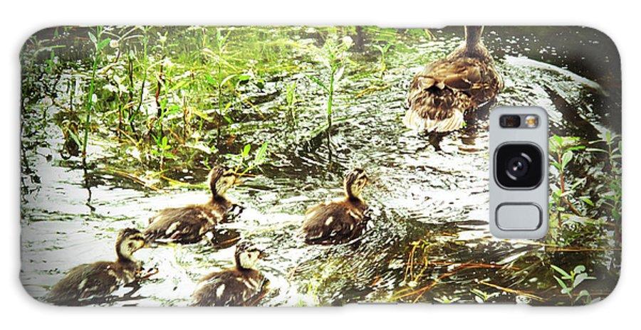 Ducks Galaxy S8 Case featuring the photograph Follow Me by Barbara McDevitt