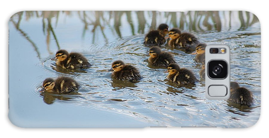 Ducklings Galaxy S8 Case featuring the photograph Follow The Leader by Harvey Scothon