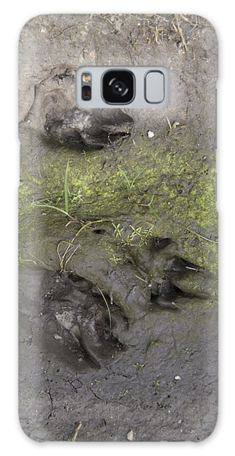 Dog Galaxy S8 Case featuring the photograph Footprints Of A Large Dog In The Mud Netherlands by Ronald Jansen