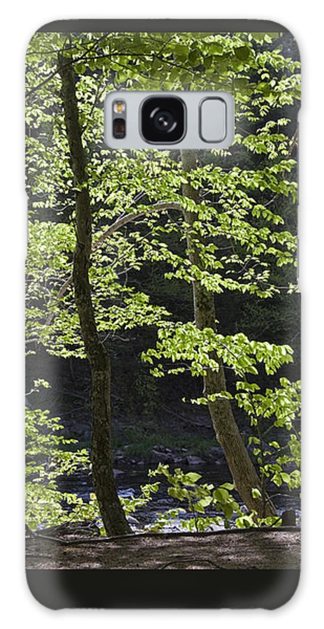 Spring Galaxy S8 Case featuring the photograph Forest Cathedral by John Stephens