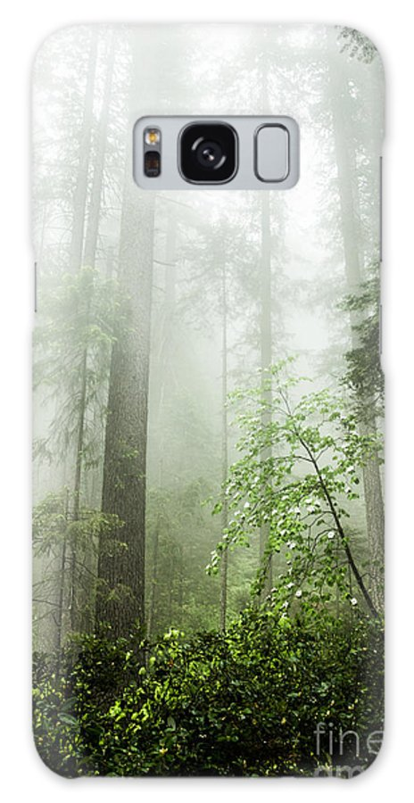 Mist Galaxy S8 Case featuring the photograph Forest Mist by Tim Tolok