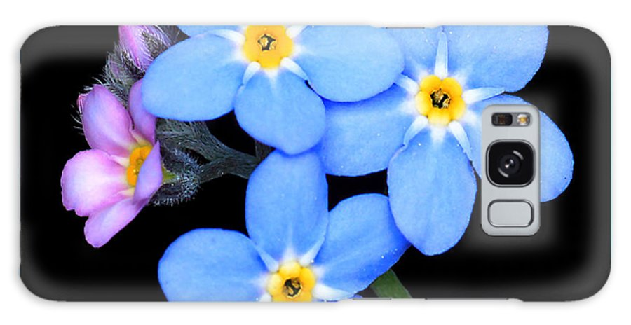 Forget-me-not Galaxy S8 Case featuring the photograph Forget-me-nots by Carolyn Derstine