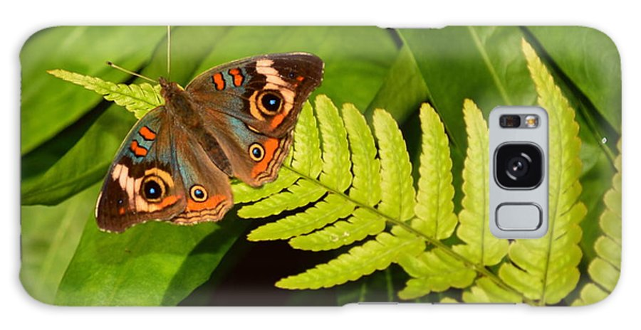 Butterfly Galaxy S8 Case featuring the photograph Four Eye Butterfly by Amy Lucid