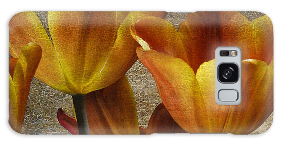 Four Galaxy Case featuring the photograph Four Tulips by Keith Gondron