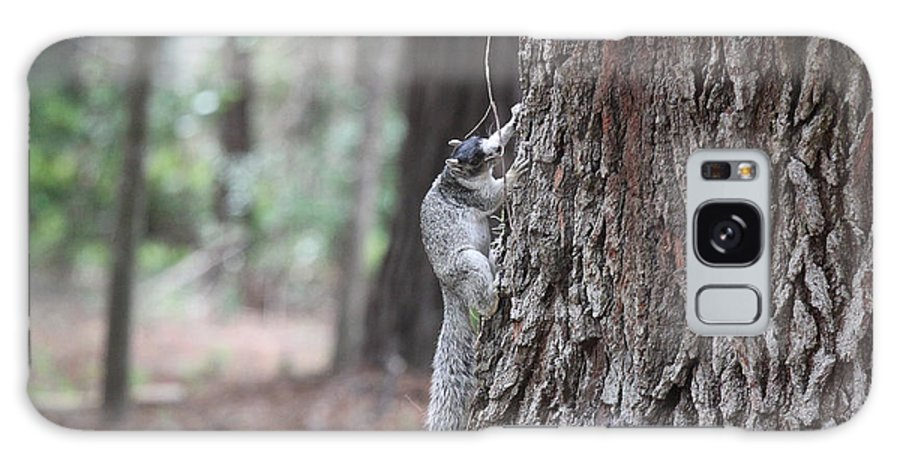 Fox Galaxy S8 Case featuring the photograph Fox Squirrel Vertical by Jean Macaluso