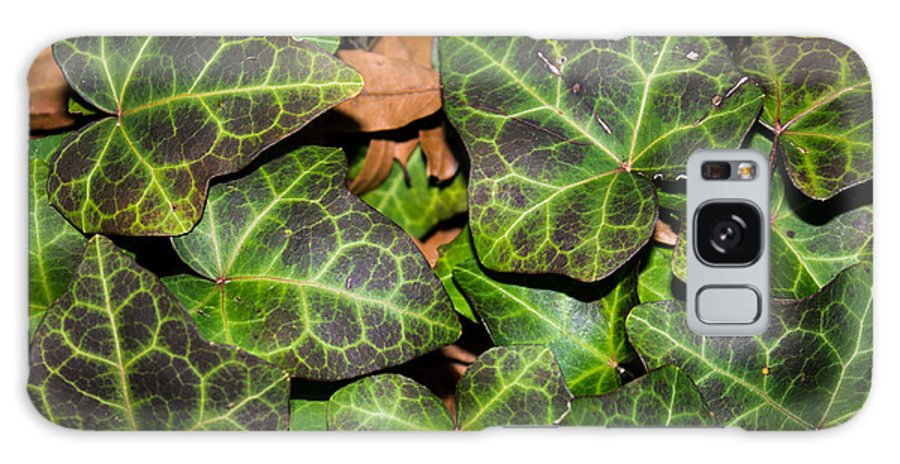Frankiegrant Photography Galaxy S8 Case featuring the photograph Fractal Ivy by Frankie Grant